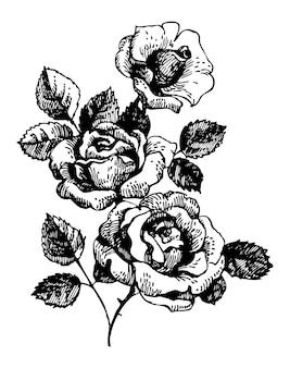 Rosen. handgezeichnete illustration des straußes aus rosenblüten
