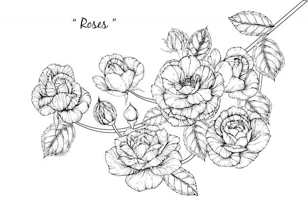 Rosenblatt und blumenzeichnungen. vintage hand gezeichnete botanische illustrationen. vektor.