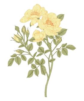 Rosenblatt und blumenzeichnungen