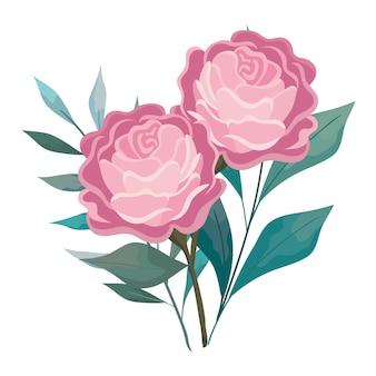 Rosenblumen mit blattmalerei, natürlicher blumennaturpflanzenverzierungsgartendekoration und botanikthemaillustration