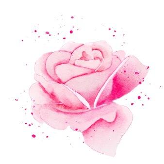 Rosenrosa blumenaquarell