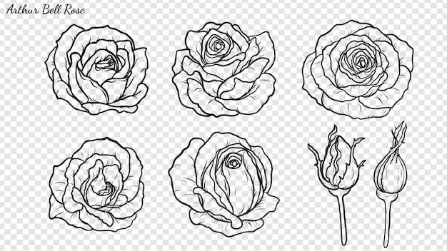 Rosenverzierungsvektor eigenhändig zeichnen.