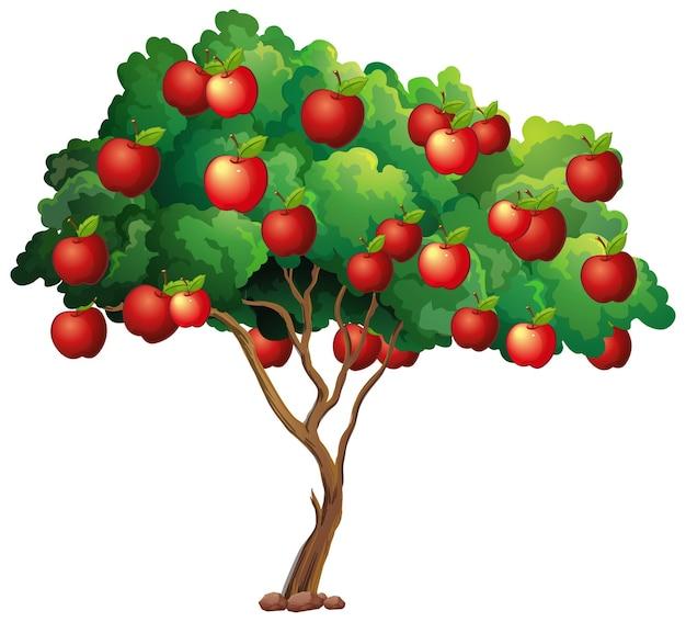 Rote äpfel auf einem baum lokalisiert auf weiß