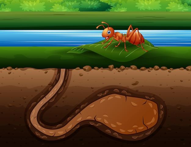 Rote ameise auf grünem blatt mit ameisenhaufen