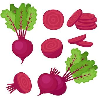Rote beete, ganzes gemüse, hälfte und scheiben, vektorillustration