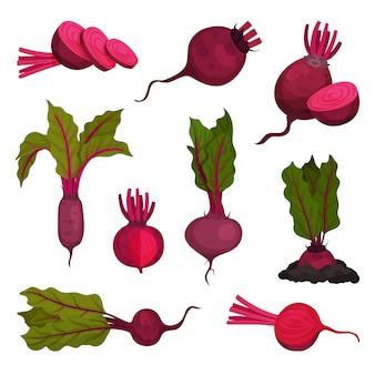 Rote-bete-konzept. wurzelgemüse und bio-lebensmittel.