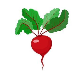 Rote bete wurzelgemüse vegetarismus und gesunde ernährung gemüse und obst s