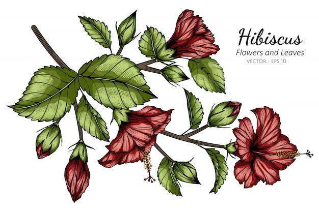 Rote hibiskusblumen- und blattzeichnungsillustration mit strichzeichnungen auf weißem hintergrund.