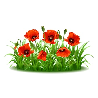 Rote mohnblumen im gras. illustration