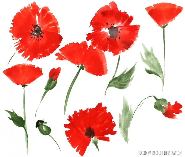 Rote mohnblumenblumen durch aquarell
