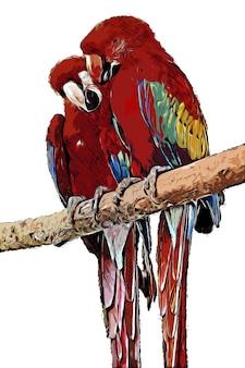 Rote papageien-aquarell-zeichnung