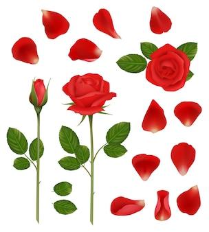 Rote rosen. schöne romantische blumenknospen und blütenblätter lassen naturhochzeitspflanzenvektor realistische sammlung. illustration blumenpflanze, rotes rosenblatt