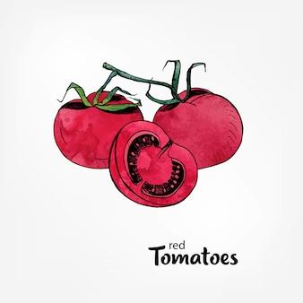 Rote tomaten auf einem ast. ganz und teilweise in einem schnitt. hand gezeichnete illustration mit aquarellbeschaffenheit.
