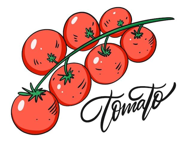 Rote tomaten auf einem ast.
