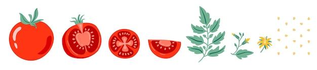 Rote tomaten-vektor-illustration schneiden sie tomaten tomatenscheibe blätter blumen und tomatensamen cartoon
