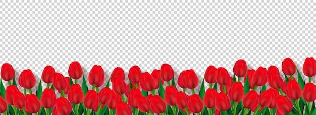 Rote tulpenblumen verzierten transparenten hintergrund