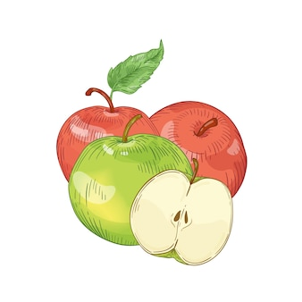 Rote und grüne äpfel handgezeichnete vektorillustration. ganz und halb geschnittenes obst der saison mit blättern auf weißem hintergrund. gesunde ernährung, bio-produkt. erntezeit. leckeres vitamin.
