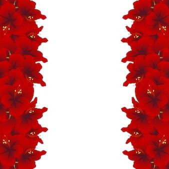 Roter amaryllis-rand