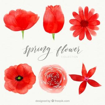 Roter frühlingsblumensatz des aquarells