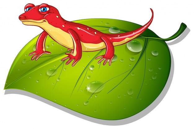 Roter gecko auf grünem blatt