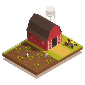 Roter hof mit isometrischer illustration der kürbisplantage