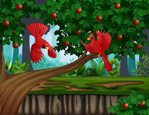 Roter kardinal fliegt in der nähe des apfelbaums