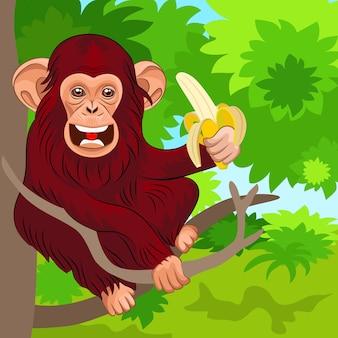 Roter schimpanse, der auf den zweigen eines baumes im dschungel mit banane sitzt