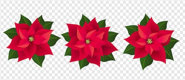 Roter weihnachtssternsatz isolierter transparenter hintergrund
