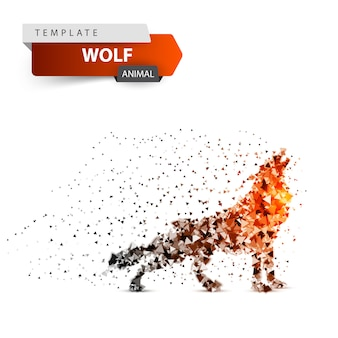 Roter wolf heult