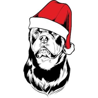Rottweiler hund in weihnachtsmütze zu weihnachten