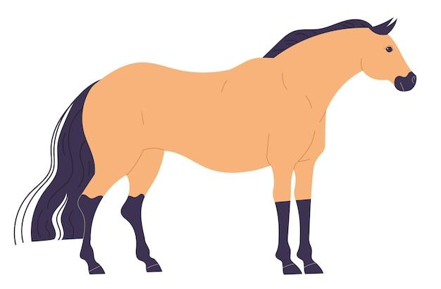 Ruhiges, gerade stehendes, helles pferd mit dunklen beinen und mähne.
