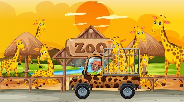 Safari bei sonnenuntergang mit kindern, die eine giraffengruppe beobachten