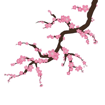 Sakura auf einem weißen hintergrund. zweig der blühenden sakura mit blumen, kirsche, frühlingsblumenkonzept. japanische und asiatische blumen.