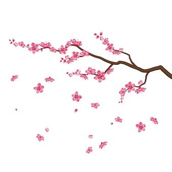 Sakura-blüten blühen lokal auf weiß