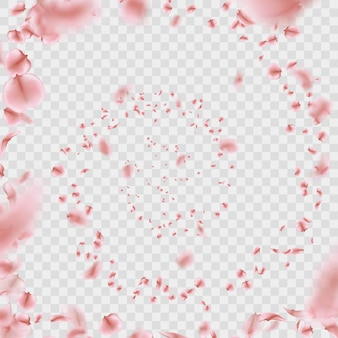 Sakura blütenblätter verwirbeln auf transparentem hintergrund.