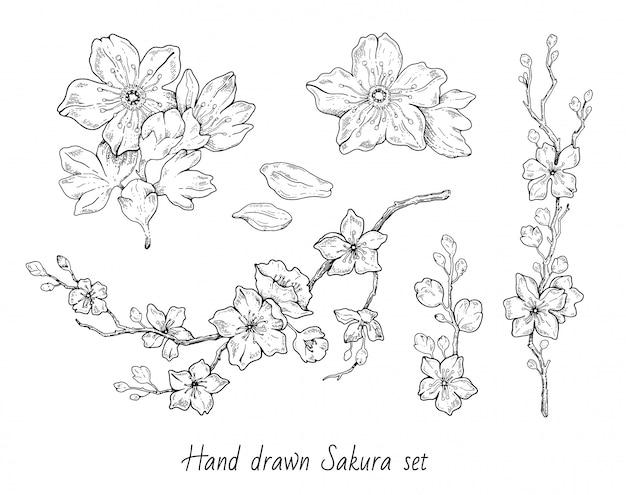 Sakura blumenblüten set, handgezeichnete linie tinte stil. heilen sie gekritzelkirschpflanze, lokalisiert auf weißem hintergrund.