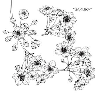 Sakura-blumenzeichnungsillustration.