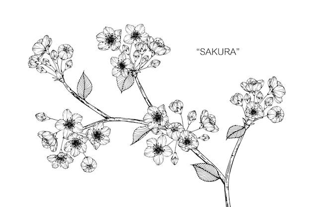 Sakura-blumenzeichnungsillustration