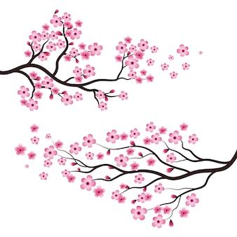 Sakura rosa blumen im zweigikonen-illustrationsdesign