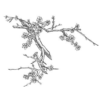 Sakura zweig blume grafik vektor illustration hand gezeichnet zweig von sakura mit blüten