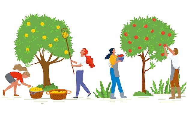 Sammeln der äpfel, die und landwirtschaftliche ernte bewirtschaften