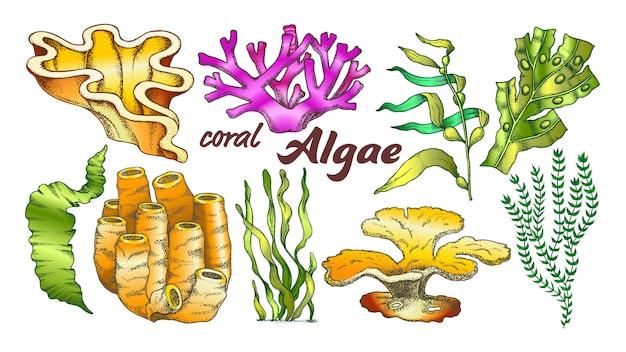 Sammlung algen-meerespflanzen-koralle