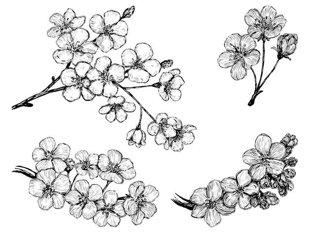 Sammlung blühender zweige von sakura. set kirschblüten. handgezeichnete vektor-illustration. botanische skizzen isoliert auf weiss. gliederungselemente für das design.