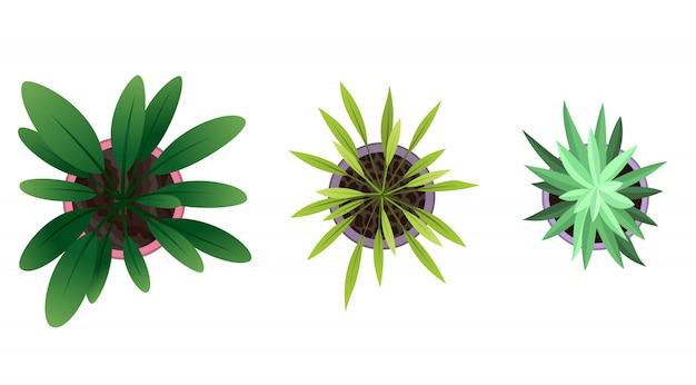 Sammlung der draufsicht der pflanze in töpfen. heimpflanzenset. kaktus, grünes blattkonzept. gartengestaltung des innenhauses. satz verschiedene zimmerpflanzen mit