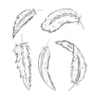 Sammlung der monochromen federn, illustration