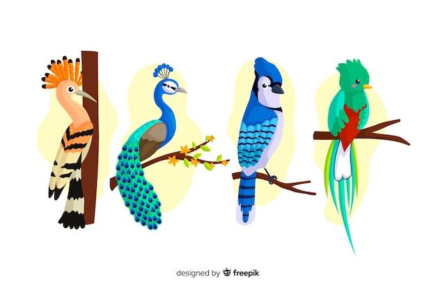 Sammlung des flachen exotischen vogels