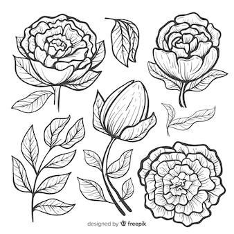 Sammlung des gezeichneten designs der pfingstrose blüht in der hand