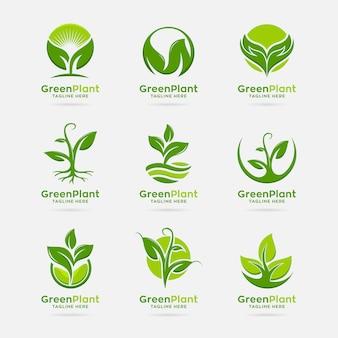 Sammlung des grünen pflanzenlogodesigns