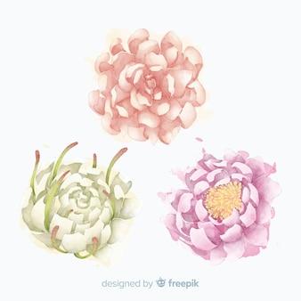 Sammlung elegante pfingstrosenblumen in der aquarellart