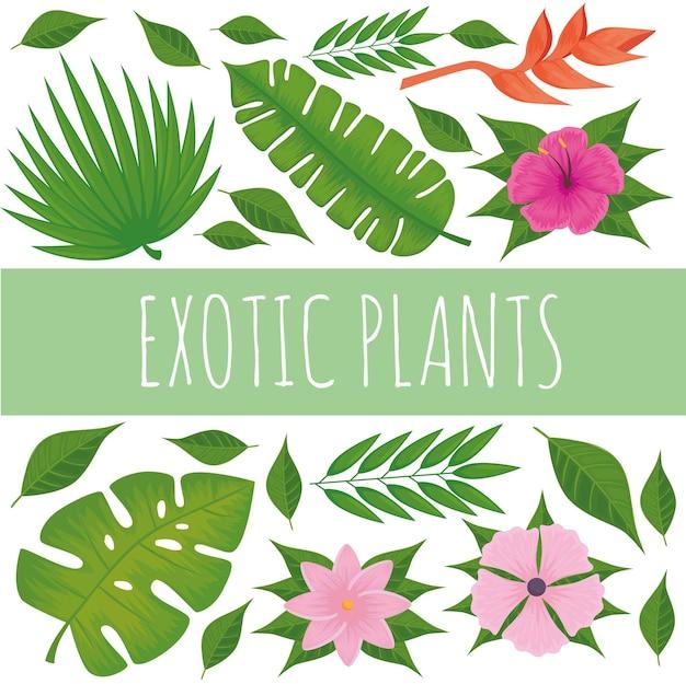Sammlung exotischer pflanzen